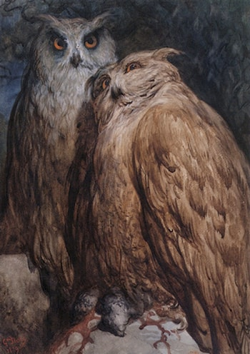 Two Owls by Gustave Dore