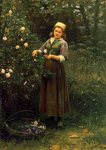 Cutting Roses by Daniel Ridgway Knight