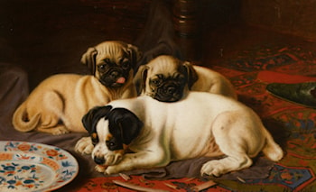 Two Pugs and a Terrier by Horatio Henry Couldery