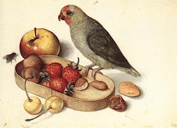 Still­Life with Pygmy Parrot by Georg Flegel