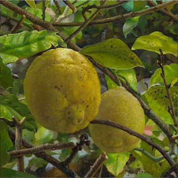 Two Lemons On The Tree by Joke Frima