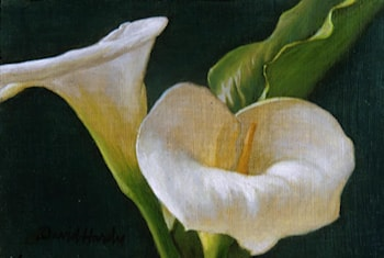 Calla Lily Duo by David Hardy