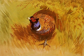 A Cock Pheasant by Archibald Thorburn
