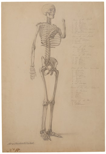 Study of a skeleton by William Edward Frost