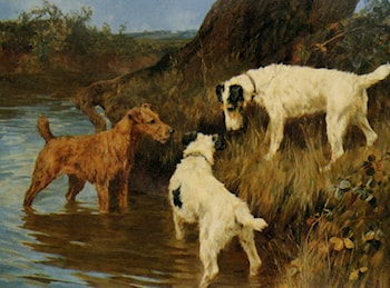 Three Terriers on the Scent by Arthur Wardle