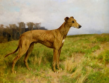 Champion Greyhound Dee Flint by Arthur Wardle