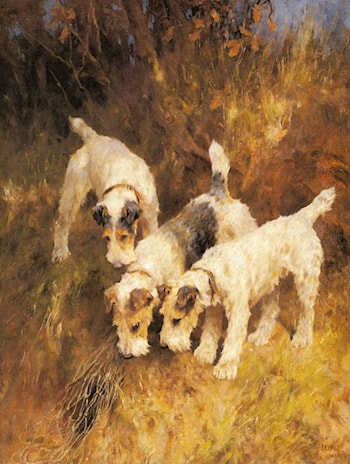 Terriers On The Scent by Arthur Wardle