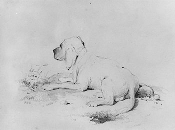 Dog (from McGuire Scrapbook) by Francis W. Edmonds