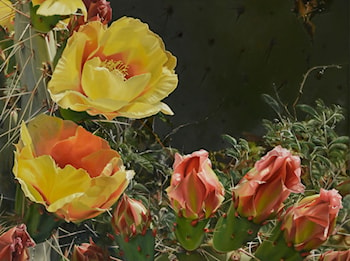 Desert Blooms by Lee Alban