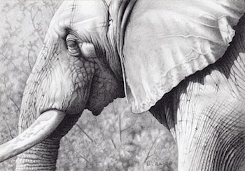 Serendipity (African Elephant) by Robert Caldwell