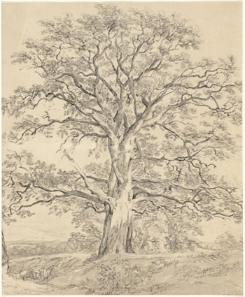 A Great Oak Tree by John Constable