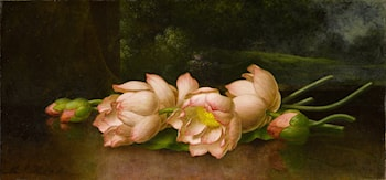 Lotus Flowers - A Landscape Painting in the Background by Martin Johnson Heade