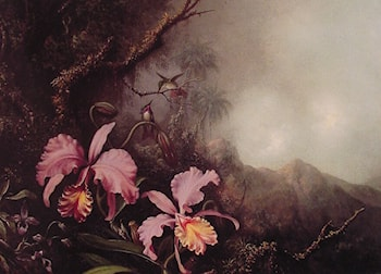 Two Orchids in a Mountain Landscape by Martin Johnson Heade