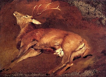 Study Of A Dead Stag by Sir Edwin Henry Landseer