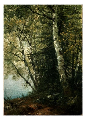 Study of Beeches by John Frederick Kensett